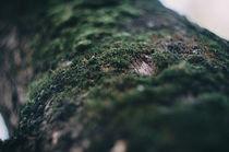 autumn forest von Inna Mosina