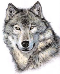 Siberian Wolf von Nicole Zeug