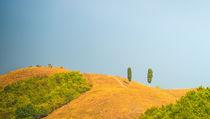 'Fields in Tuscany' von dar1930