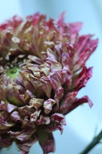 dry flower - two von chrisphoto