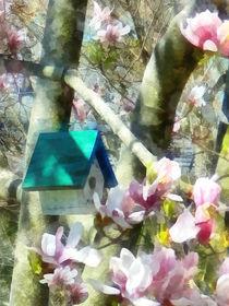 Birdhouse in Magnolia by Susan Savad