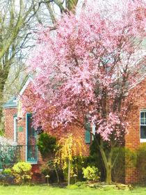 Cherry Tree by Brick House von Susan Savad
