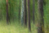 Waldrauschen von Daniel Burdach