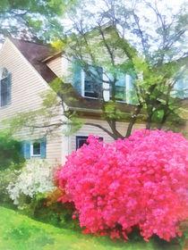 Magenta Azalea Garden by Susan Savad