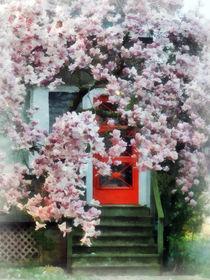 Magnolia by Red Door by Susan Savad