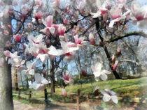 Magnolia Closeup by Fence by Susan Savad