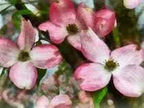 Pink Dogwood Closeup by Susan Savad
