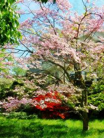 Pink Flowering Dogwood von Susan Savad