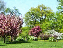 Fa-rowoffloweringtrees