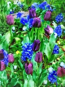 Sig2-springgardeninshadesofpurple