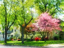 Spring - The Trees Are Flowering On My Street by Susan Savad