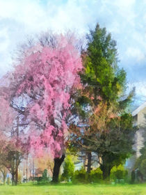 Spring - Weeping Cherry and Evergreen von Susan Savad