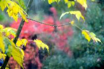 Herbstfarben 02 by J.A. Fischer