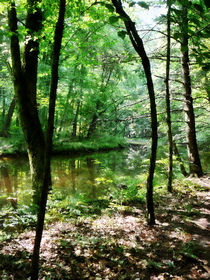 Fa-shadywoods2