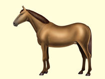 Horse anatomy - Body parts - No text von William Rossin
