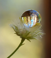 The reflection in the drop. von Yuri Hope