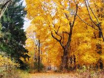Fa-autumnpath2