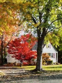 Autumn Street With Red Tree von Susan Savad