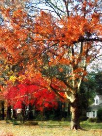 Gft-autumnsycamoretree