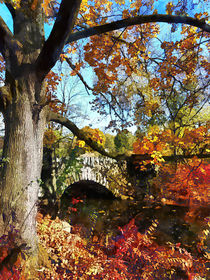 Sig2-autumntreebysmallstonebridge