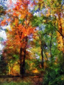 Autumn Woods by Susan Savad