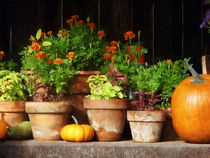 Marigolds and Pumpkins by Susan Savad
