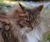 grumpy cat by Eike Holtzhauer