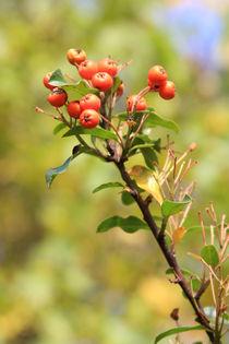 Herbsttöne I, autumnal colors I von Do Behm