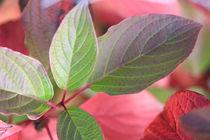 Herbsttöne III, autumnal colors III von Do Behm