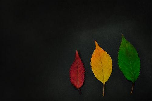 Artflakes-autumn-chronicles