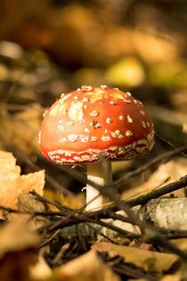 Fliegenpilz im Herbstwald 2 by toeffelshop