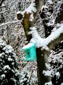 Turquoise Birdhouse in Winter by Susan Savad