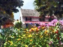 Brilliant Summer Garden by Susan Savad