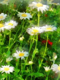 Field of Daisies by Susan Savad