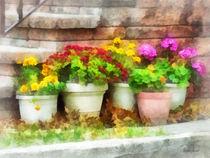 Flowerpots with Autumn Flowers von Susan Savad