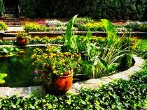 Garden Pond by Susan Savad