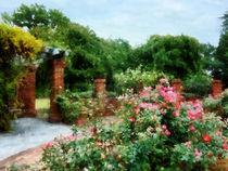 Into the Rose Gardem by Susan Savad