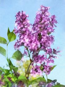 Lilacs Against the Sky von Susan Savad