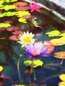 Lotus Pond by Susan Savad