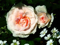 Pale Pink Roses in Garden by Susan Savad