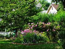 Suburban Garden With Roses von Susan Savad