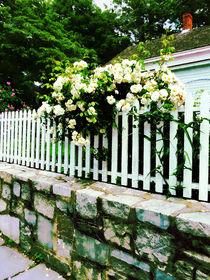 White Roses on a Picket Fence by Susan Savad