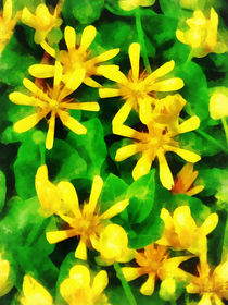 Yellow Wildflowers by Susan Savad