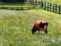 Cow Grazing in Pasture von Susan Savad
