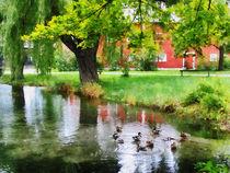 Ducks on Pond by Susan Savad
