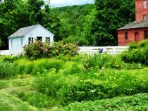 Farmer's Garden by Susan Savad