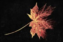 Goldener Oktober von leddermann