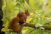 Eichhörnchen im Herbstwald 2 von toeffelshop