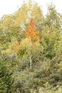 Herbstlicher-wald