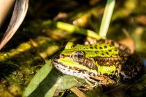 frog vision von bieladesign